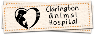 Clarington Animal Hospital Home